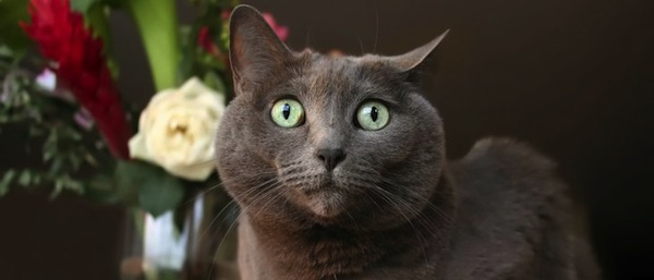 Por qué se estresan los Gatos