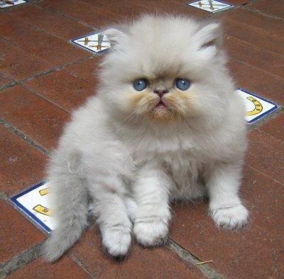 Por que tener un Gato en casa  Por qué tener un Gato en casa