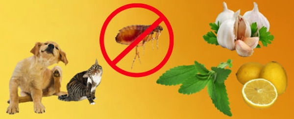 Remedios naturales para Mascotas