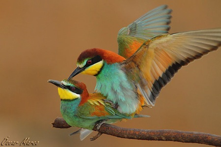 Alimento para aves 2 Alimento para aves
