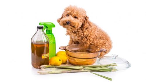 Productos naturales para el mal olor del perro