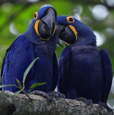 La depresion en las Aves  La depresión en las Aves