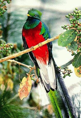plumas de las aves