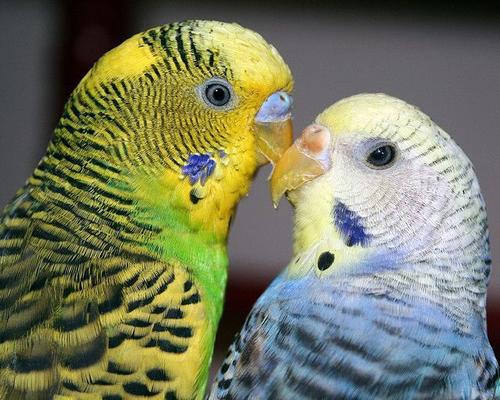 Un pájaro fiel a su Pareja