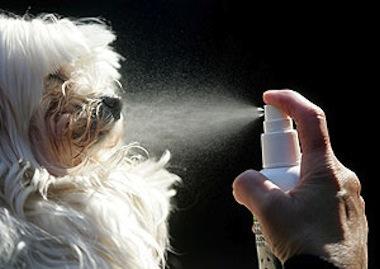 mal olor en mascotas