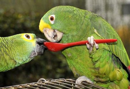 Alimentación aves