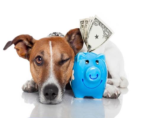 Cómo ahorrar dinero con tu Mascota