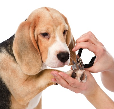 Cómo cortarle las uñas a tu Perro