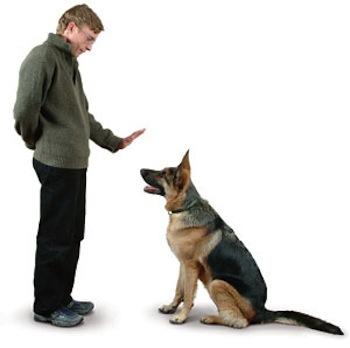 Como educar perros