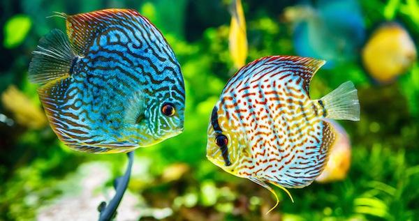 como-elegir-un-pez-sano