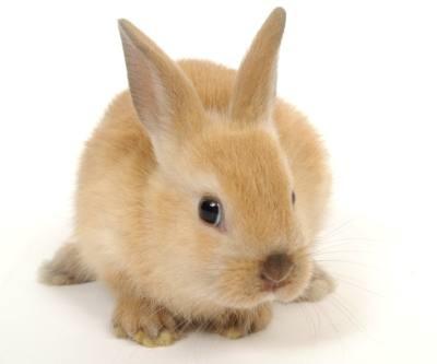 Como elegir un buen Conejo