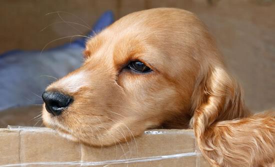 Curiosidades sobre la Nariz del Perro