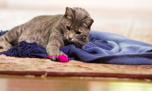 Recomendaciones para el cuidado de los gatos