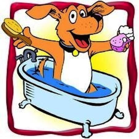 Higiene y de la Piel y manto de nuestro Perro