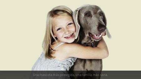 Los Parásitos en Mascotas y su tratamiento