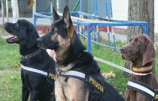 Los perros de trabajo