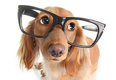 Problemas de Visión en Perros