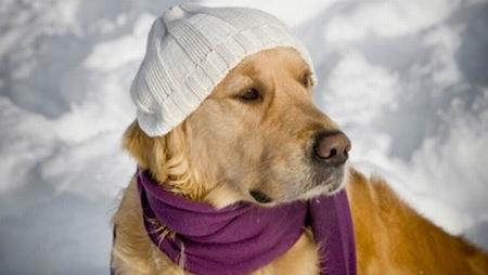 Proteja a las Mascotas del Frío
