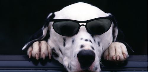 Como convivir con un perro ciego
