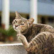Cómo mantener aseado tu Gato