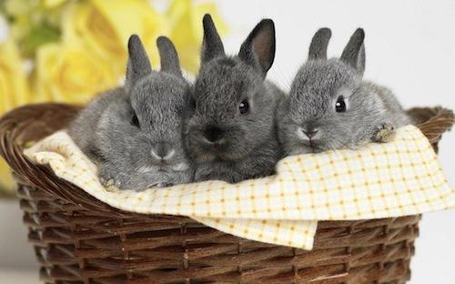 consejos-para-cuidar-tu-conejo