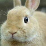 Consejos para cuidar tu Conejo