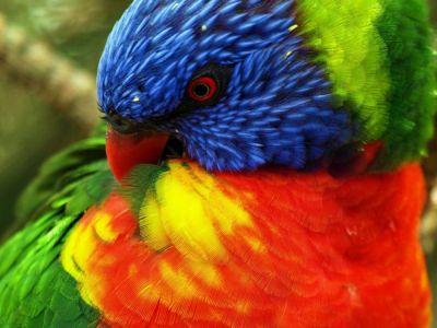 Evita el Picaje en las Aves