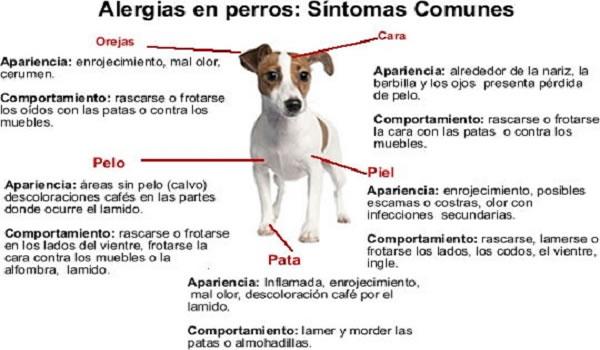 Las Principales Alergias en Perros