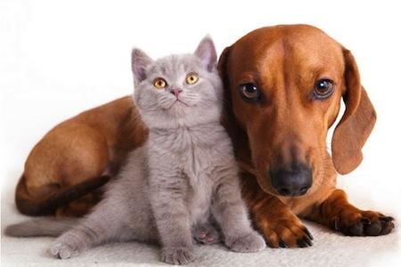 Las pulgas y las enfermedades en Mascotas  Las pulgas y las enfermedades en Mascotas