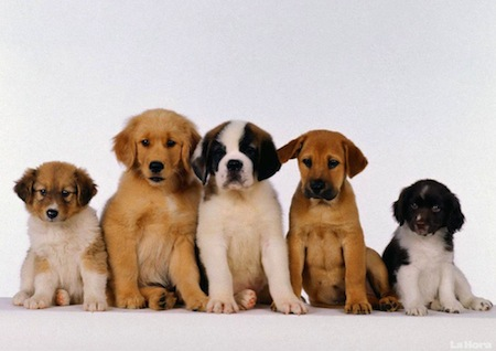 Razas de perros para convivir con Niños