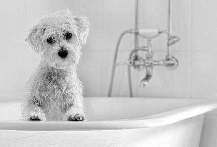 Remedios caseros para la Sarna en Perros