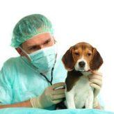 Tumores Mamarios en Caninos