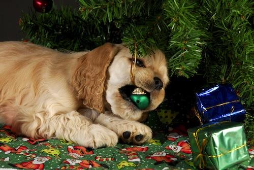 como-cuidar-tu-mascota-en-navidad