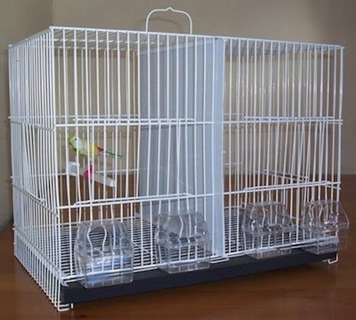 Cómo limpiar la jaula de nuestras Aves