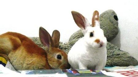 Cuidado de conejos