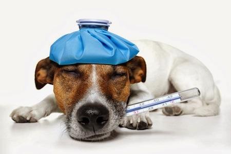 Diarrea en Perros causas y tratamiento