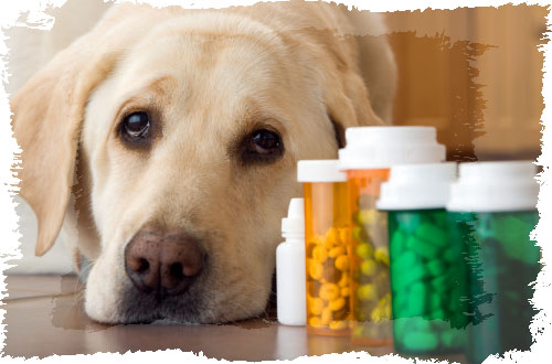 Enfermedades de perros  Enfermedades de perros