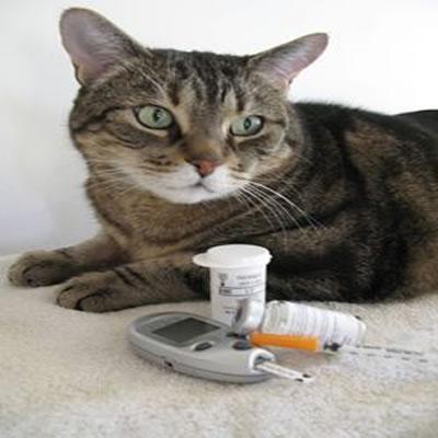 Los Gatos Diabéticos y su tratamiento