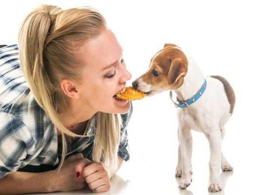 Recetas rápidas y sanas para tu Mascota