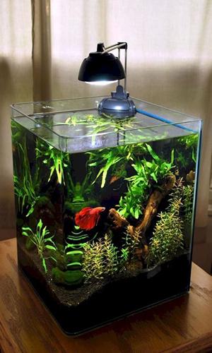 Recomendaciones para limpiar un acuario