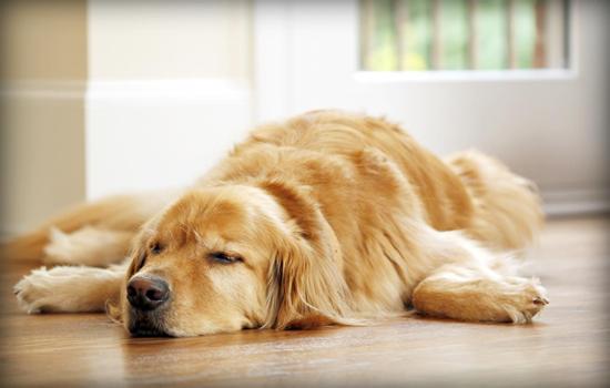 Causas de la Intoxicación en perros