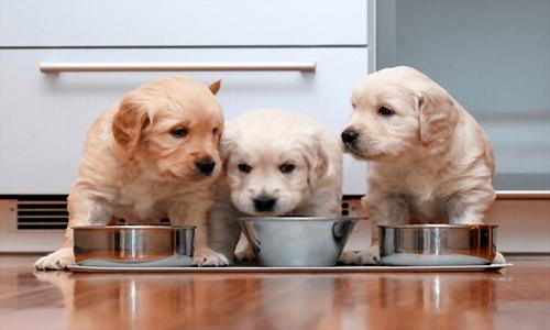Dieta para perros cachorros