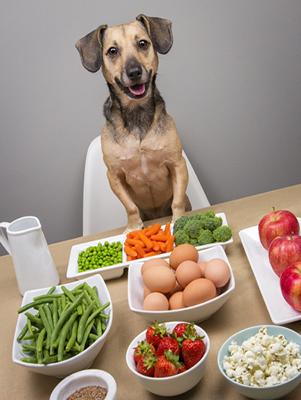 Dieta para perros balanceada