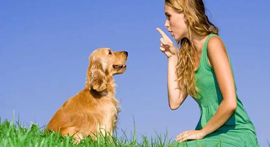 Cómo socializar un cachorro