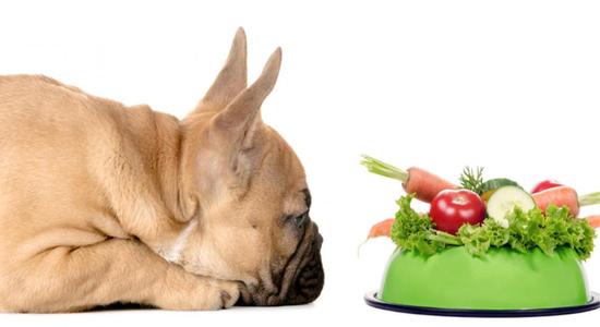 Frutas y verduras para perros con cáncer