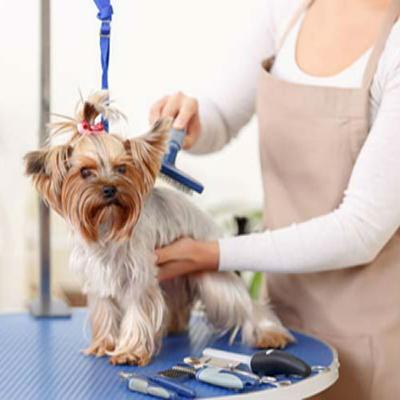 Cuidados del pelo largo en perros