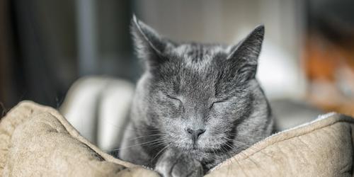 Cuidados de un gato mayor