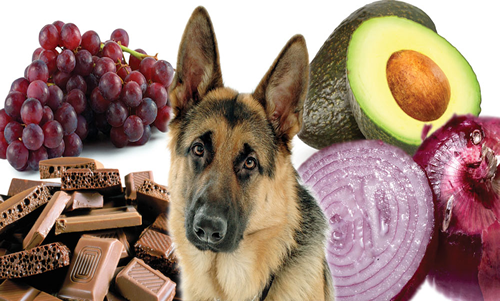 10 alimentos tóxicos para Perros
