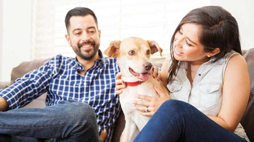 Como mantener a tu Perro Sano