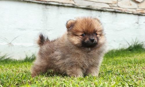 6 cuidados para perros pequeños